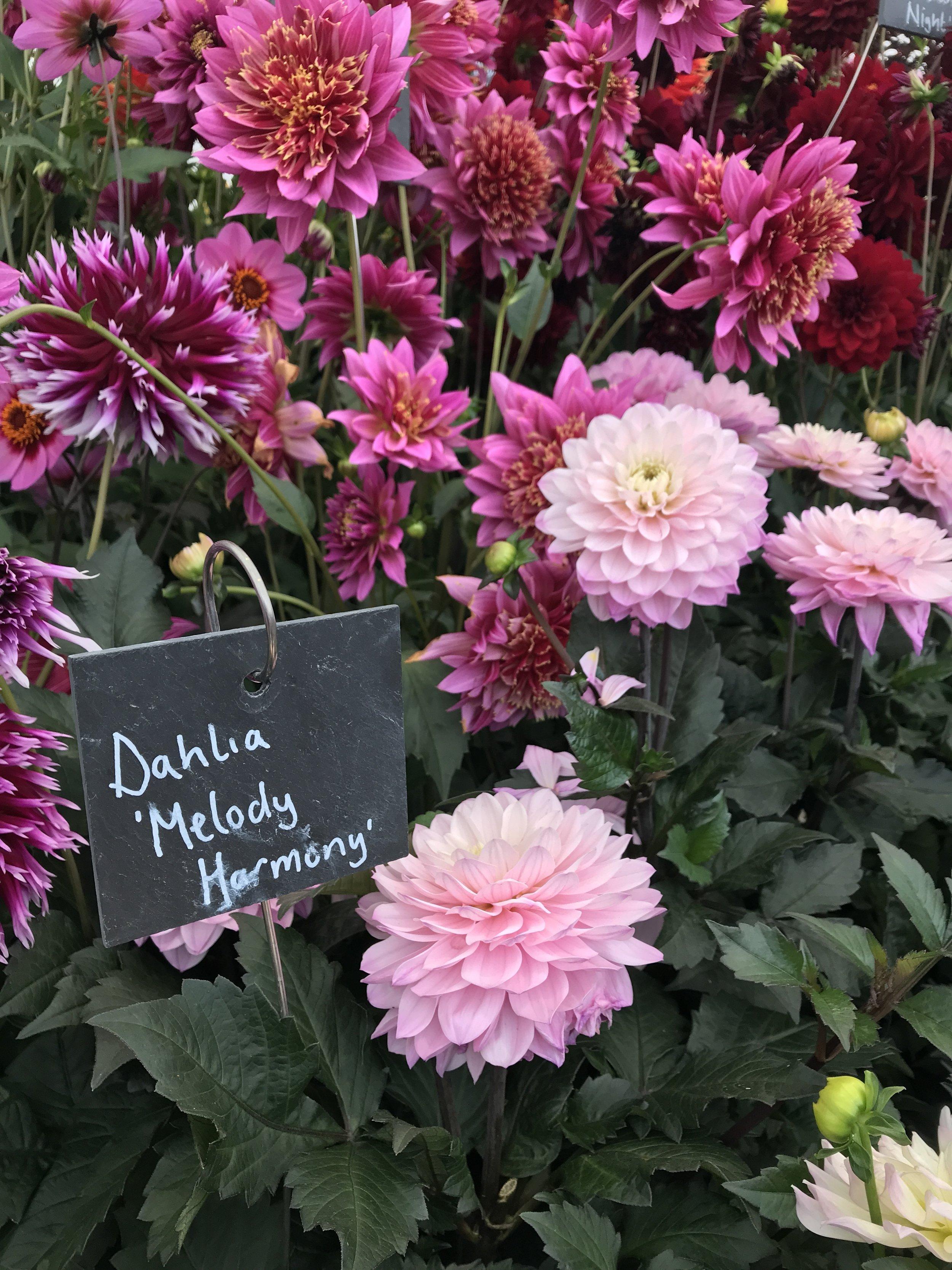 chatsworth flower show stall holders