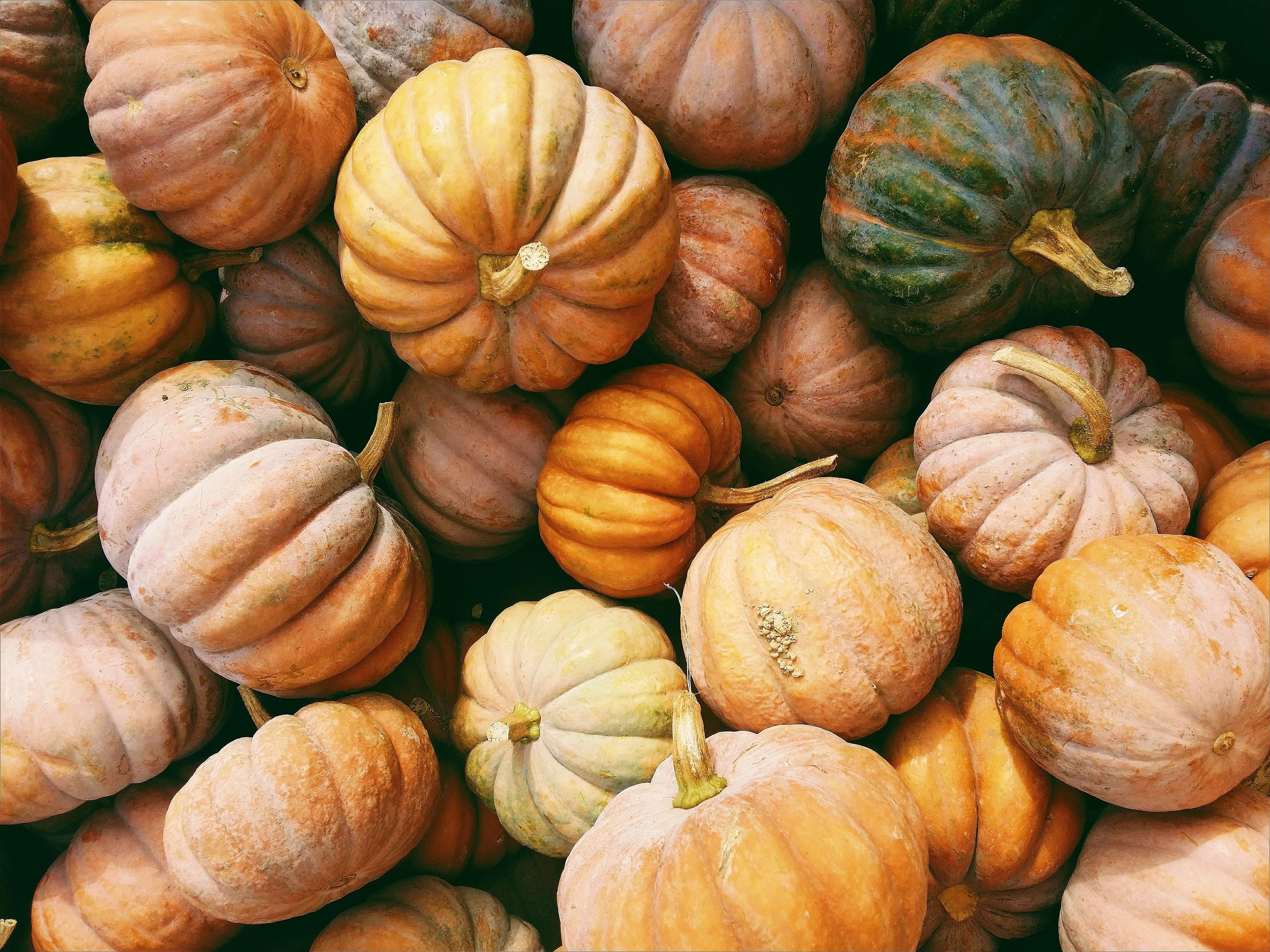 pumpkin picking derbyshire