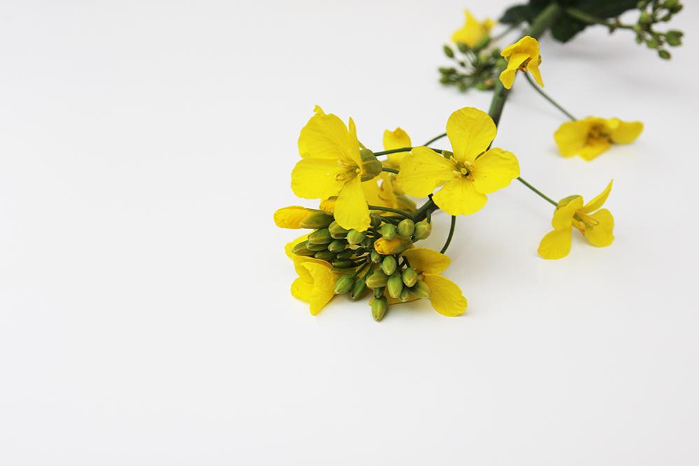 flower_steam_small.jpg