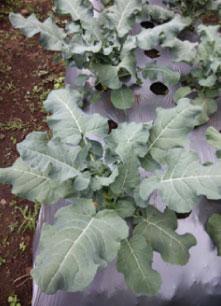 CROP FARMING TRIALS