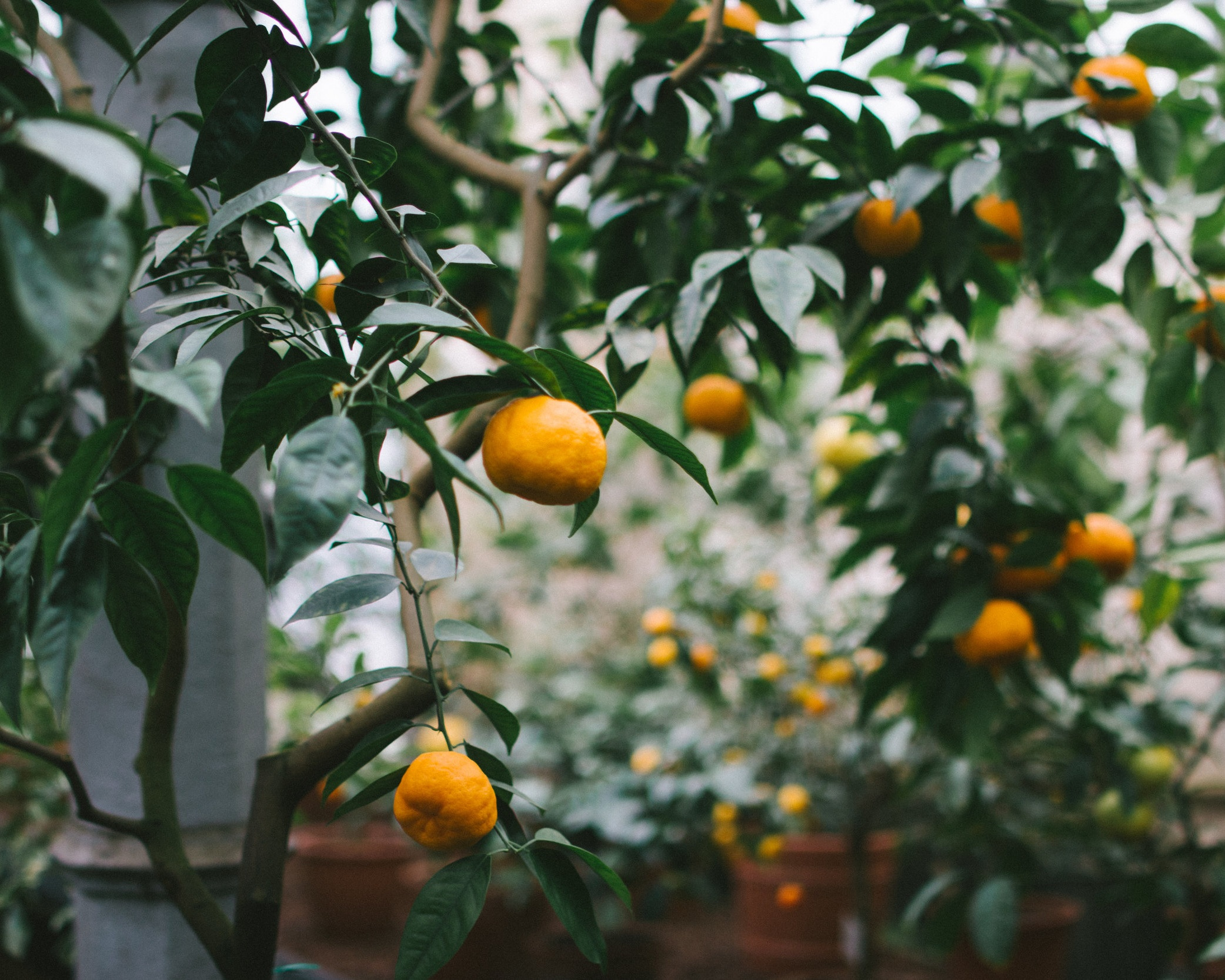 - A garden left to flourish and grow wild provides a magical haven for all nature, replenishing the earth with its life force. Petitgrain (Citrus aurantium), also known as the bitter orange tree is soothing and calming, having the ability to both relax and uplift.