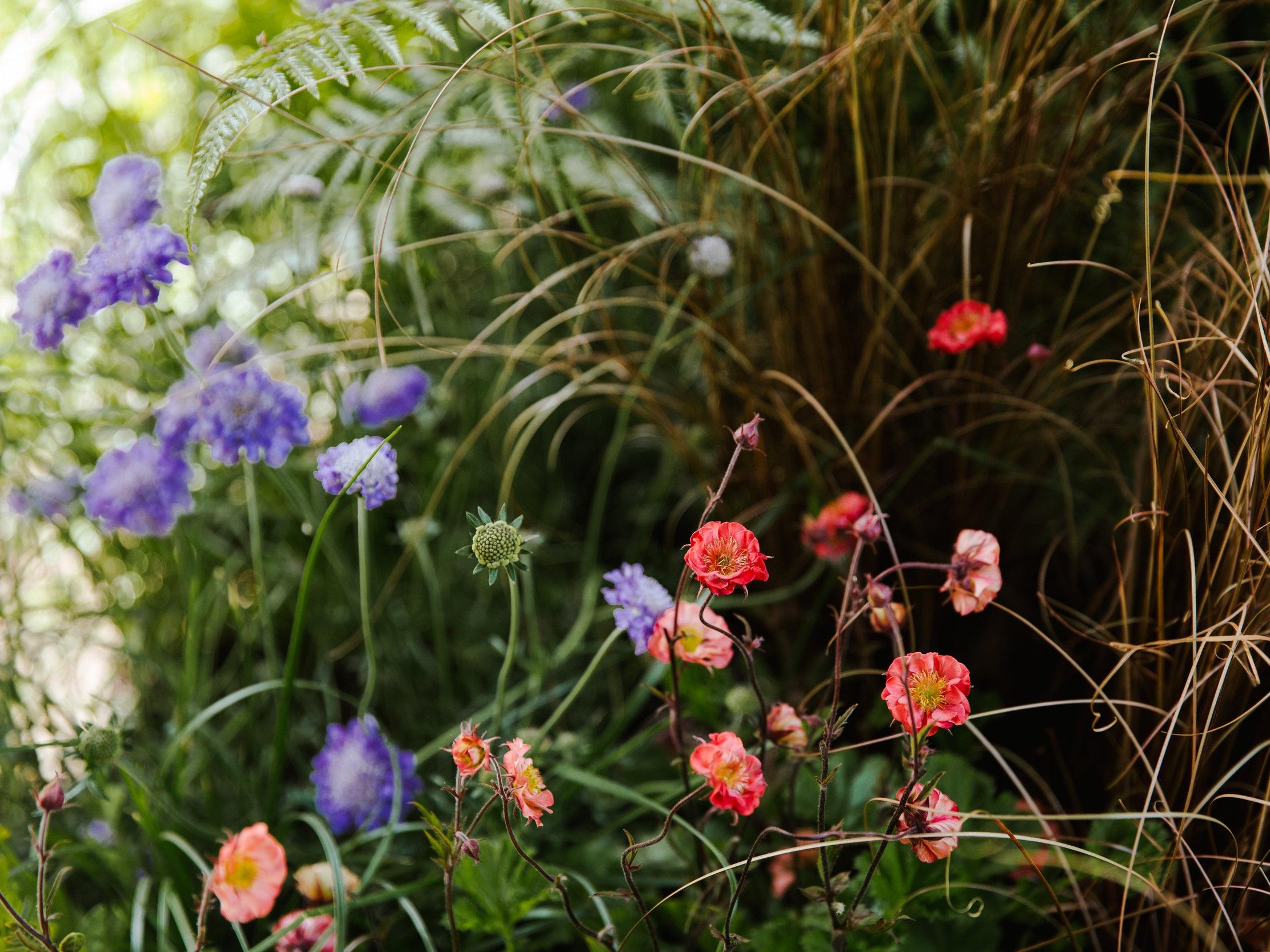 LAND-Chelsea-flower-show.jpg