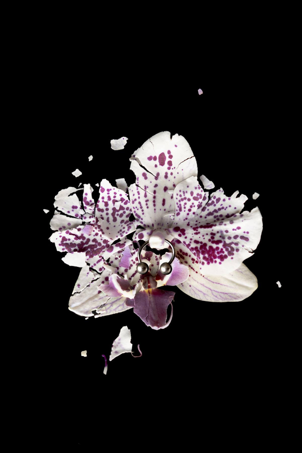 DSC00224-flower-bali-2018-sm.jpg
