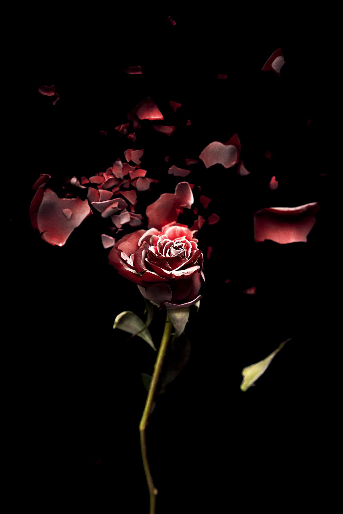 DSC00096-flower-bali-2018-sm.jpg