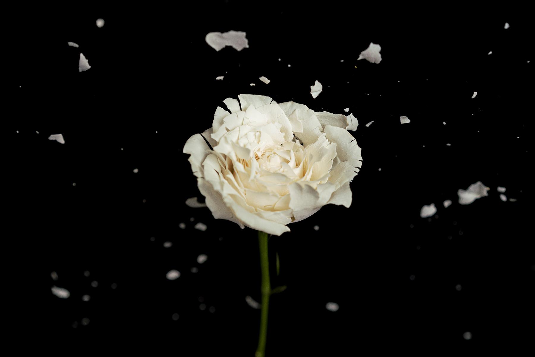 DSC00135-flower-bali-2018-sm.jpg