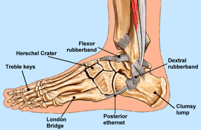 Ankle1.png