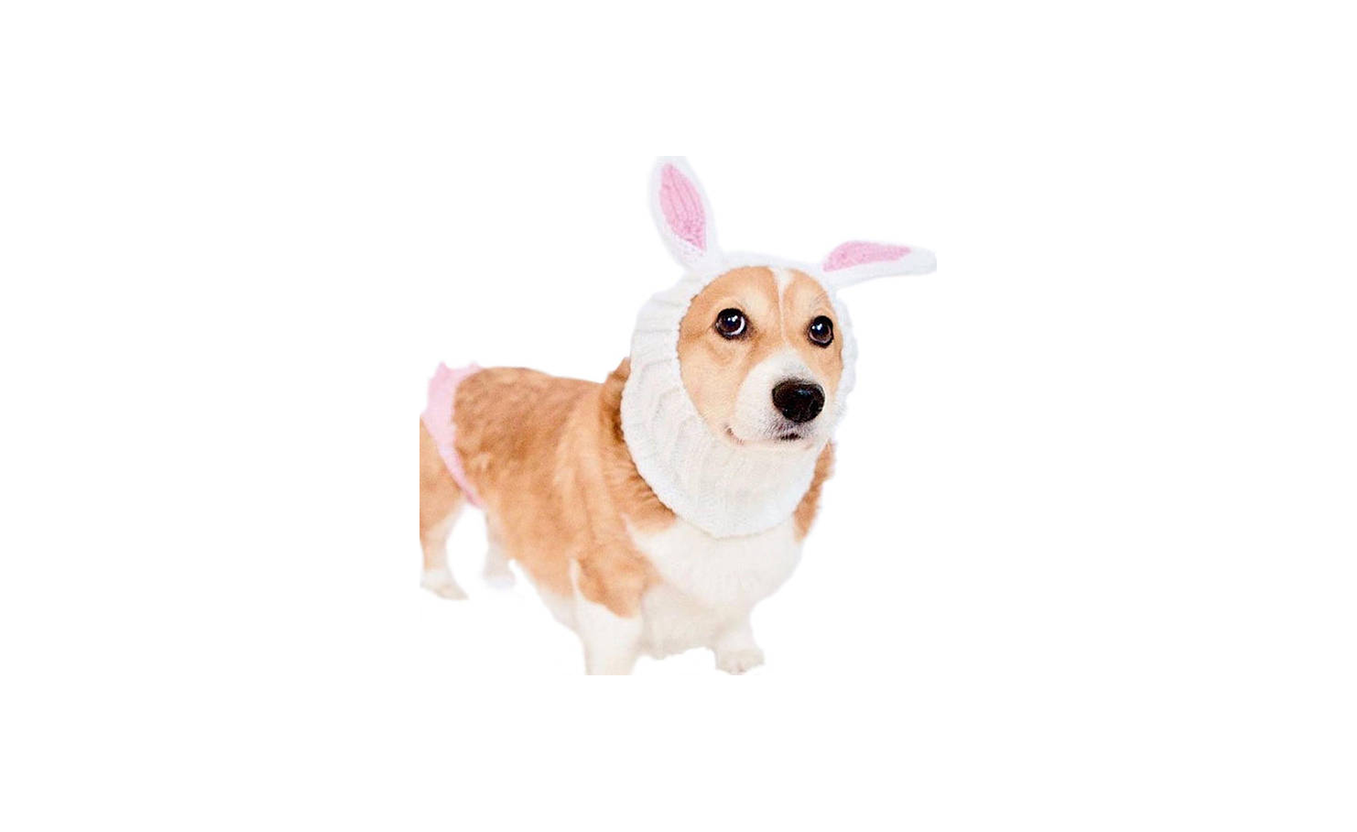 Bunny Dog Costume on Etsy