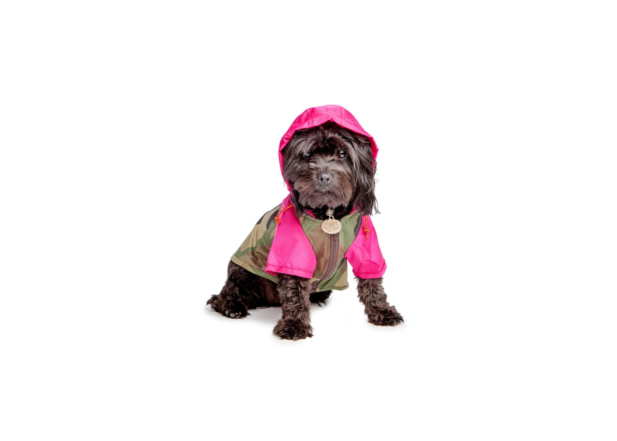 Wagwear Nylon Colorblock Rainbreaker