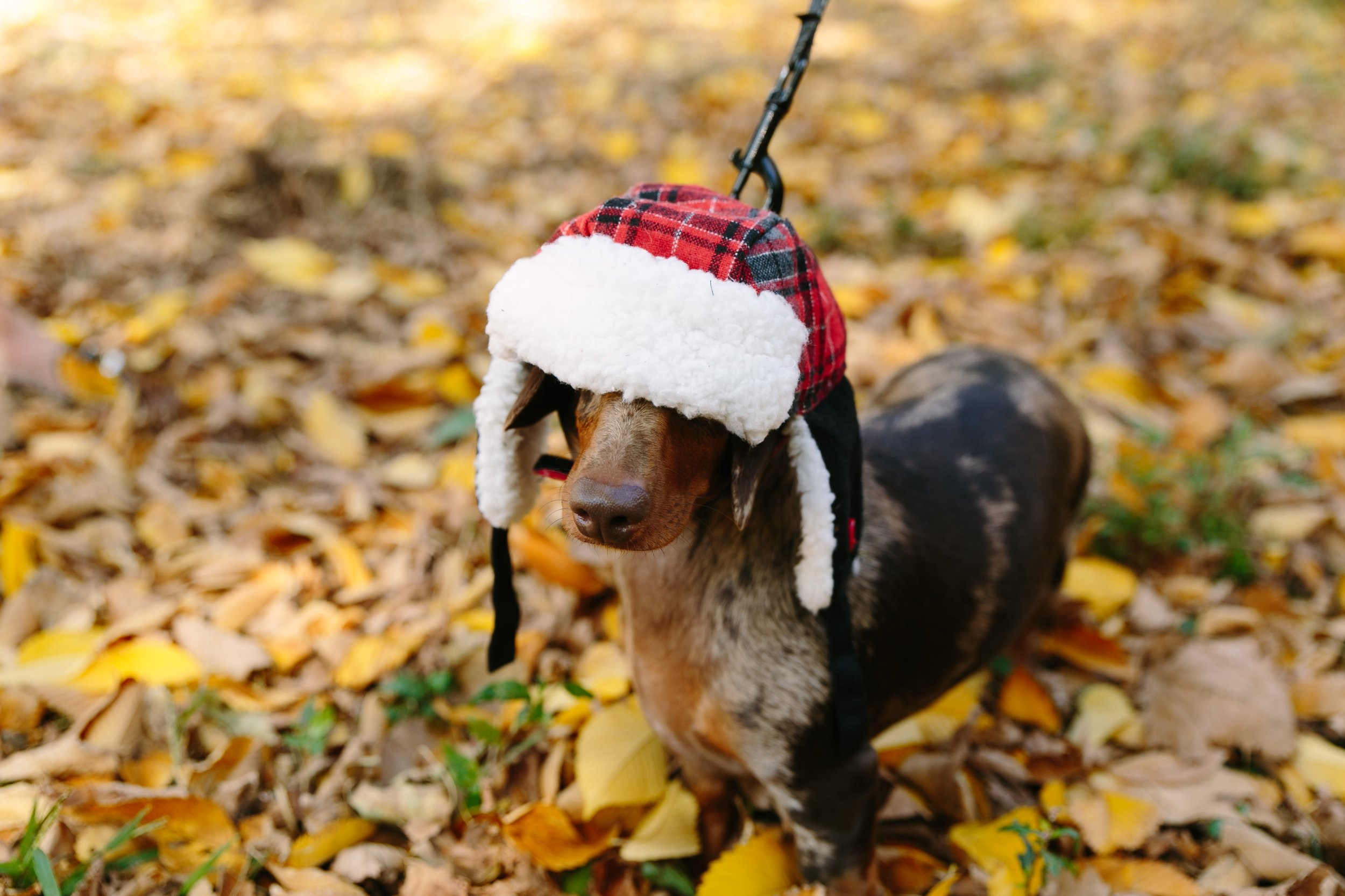 Find a fall hat that makes you feel this sassy.✌🏻
