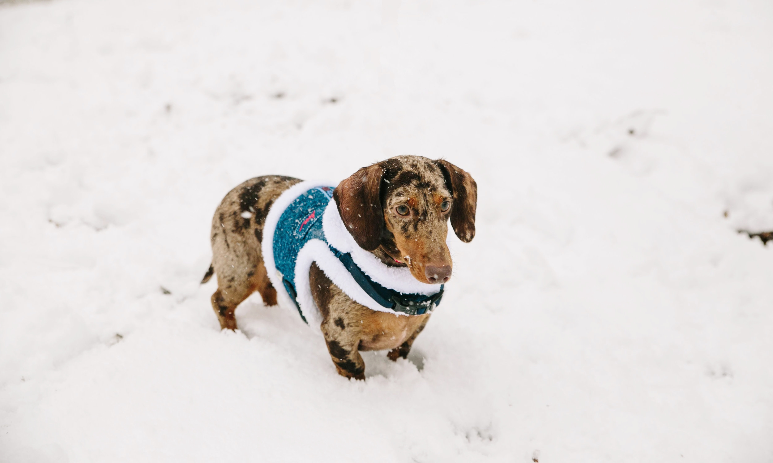 Dave playing in Saturday's snow
