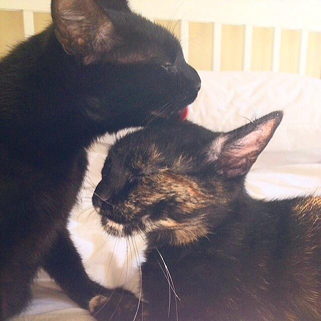 Sarah McConville's cats, Dot and Hetty