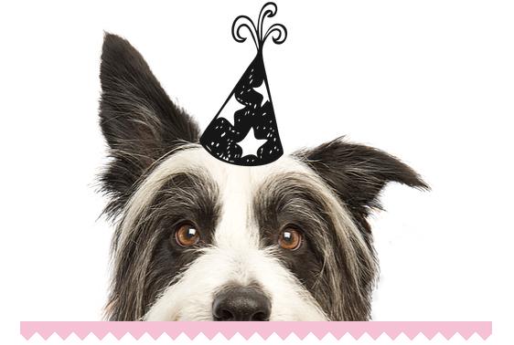 Image courtesy of Lola's Dog Treats