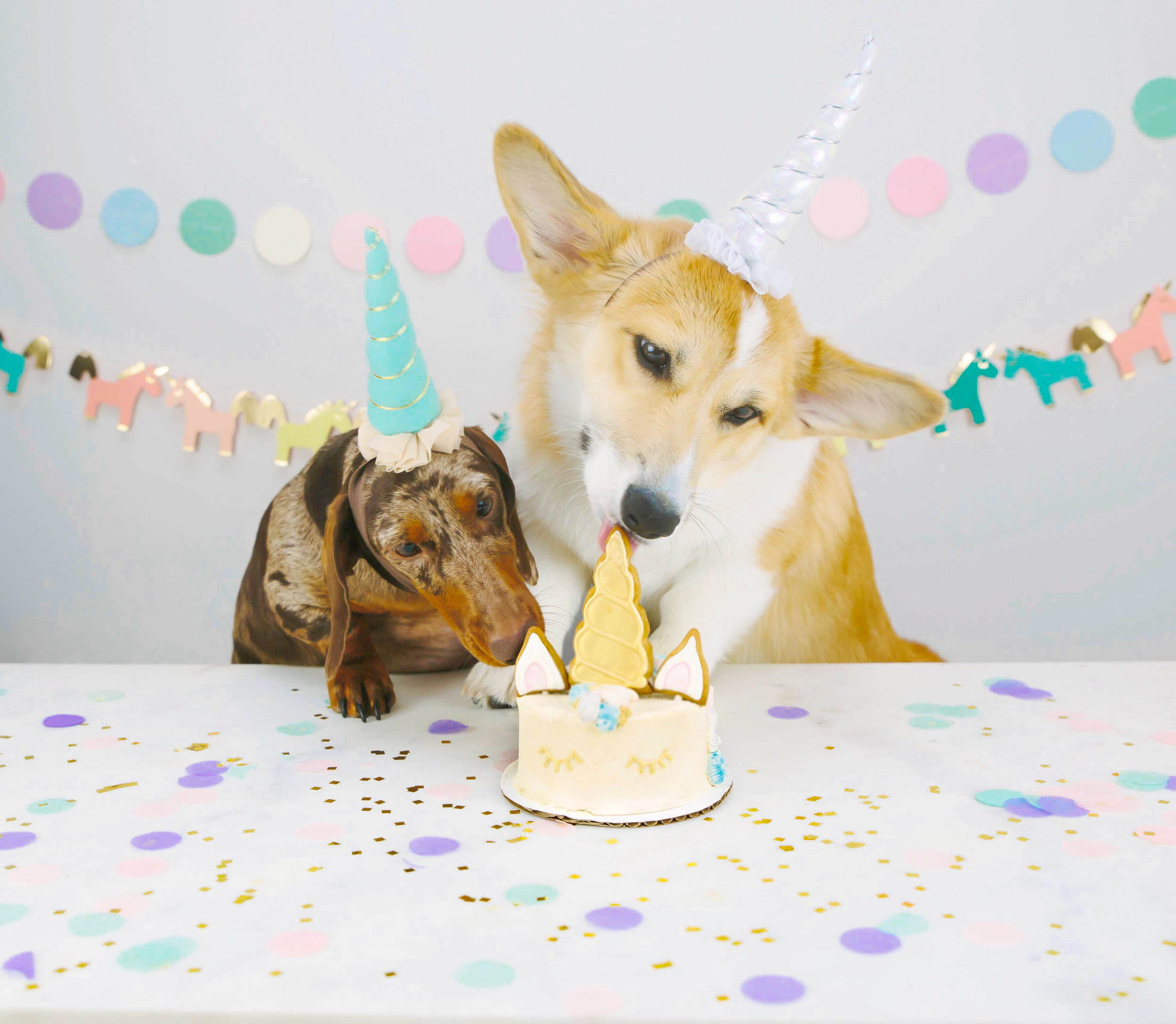 dog birthday party with unicorn cake the dapple theweenandthequeen