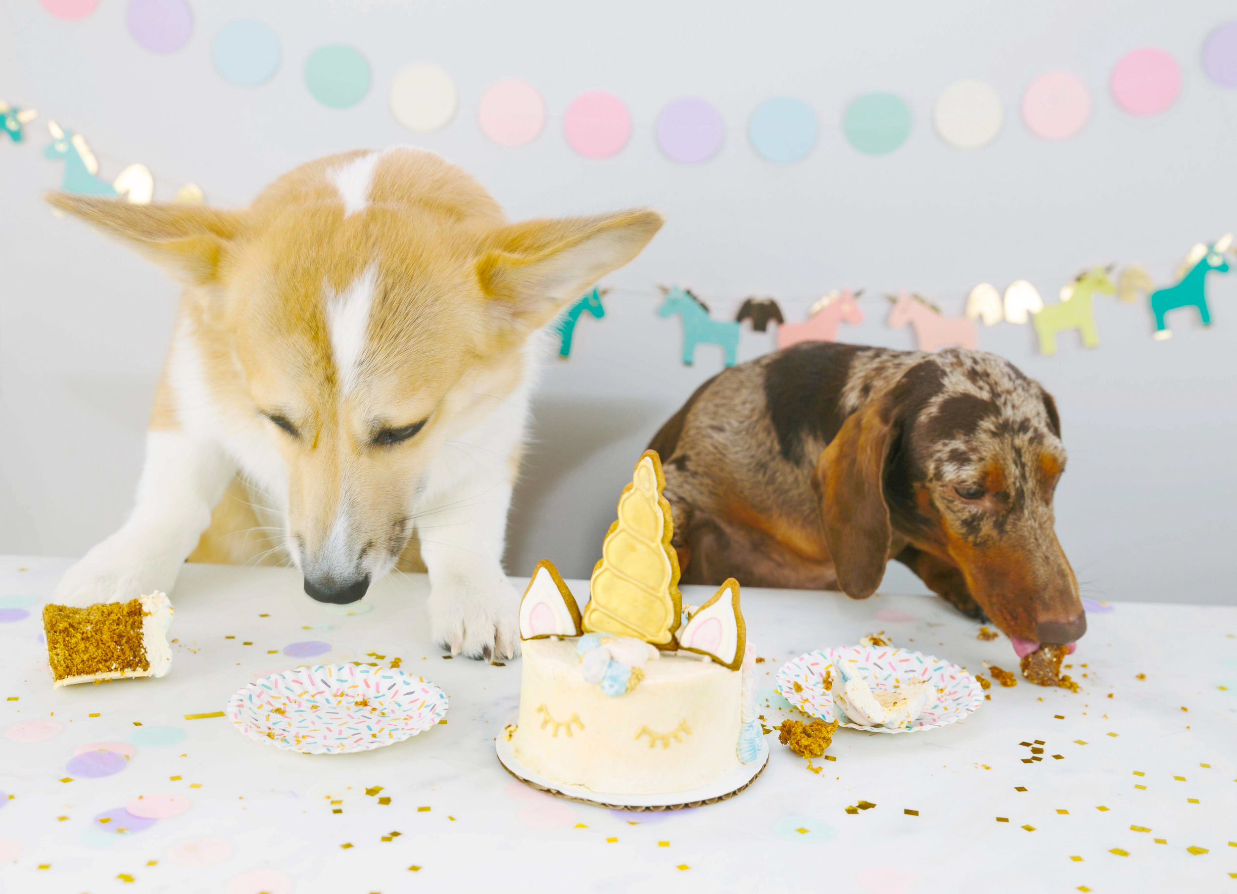 dog birthday party with unicorn cake on the dapple with the ween and the queen