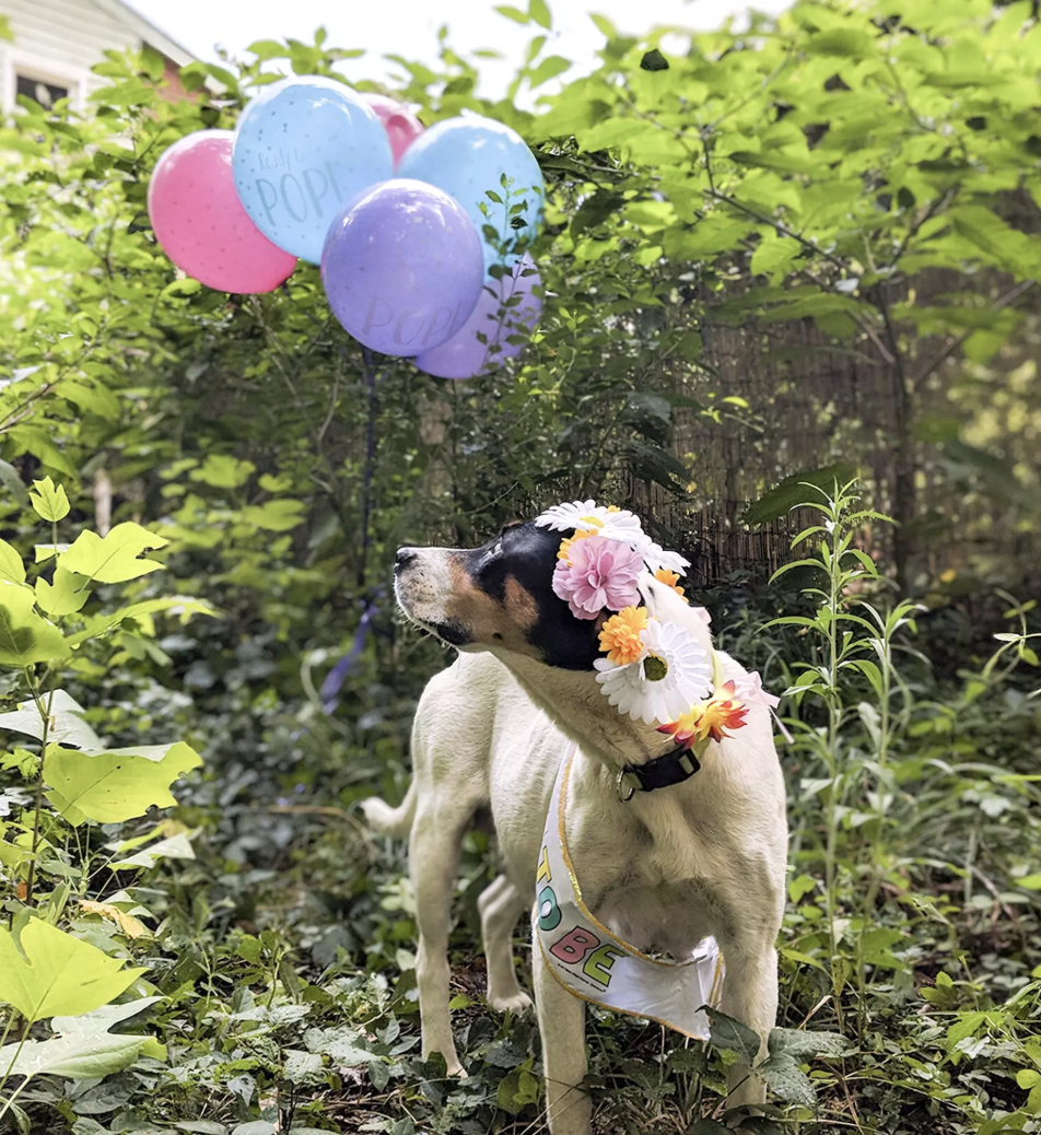 Image courtesy of Sarah Freeman / People Pets