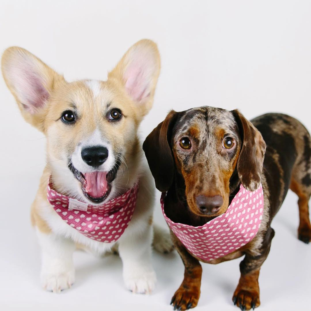 Dave and Elizabeth wearing Whiskers & Stitched bandanas