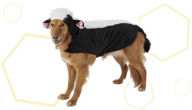 Skunk Dog Halloween Costume from Chewy