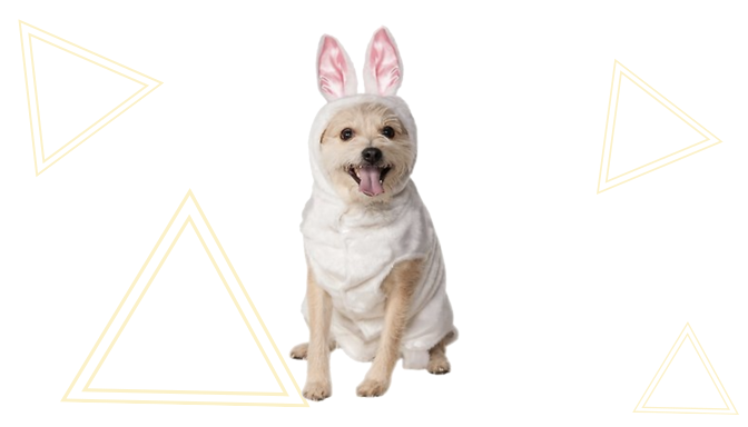 Bunny Dog Halloween Costume from Chewy