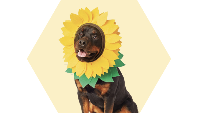 Sunflower Dog Halloween Costume from Target