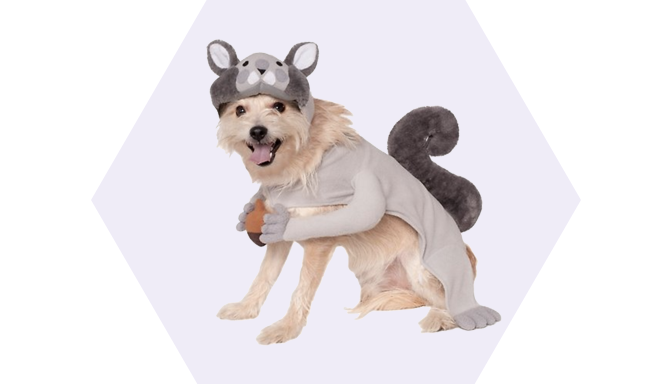 Squirrel Dog Halloween Dog Costume from Chewy