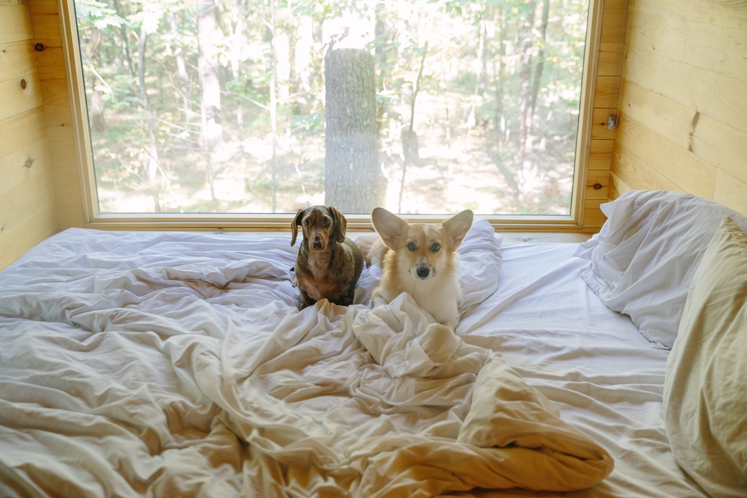 Dog Friendly Travel Review of Getaway Tiny House Vacations