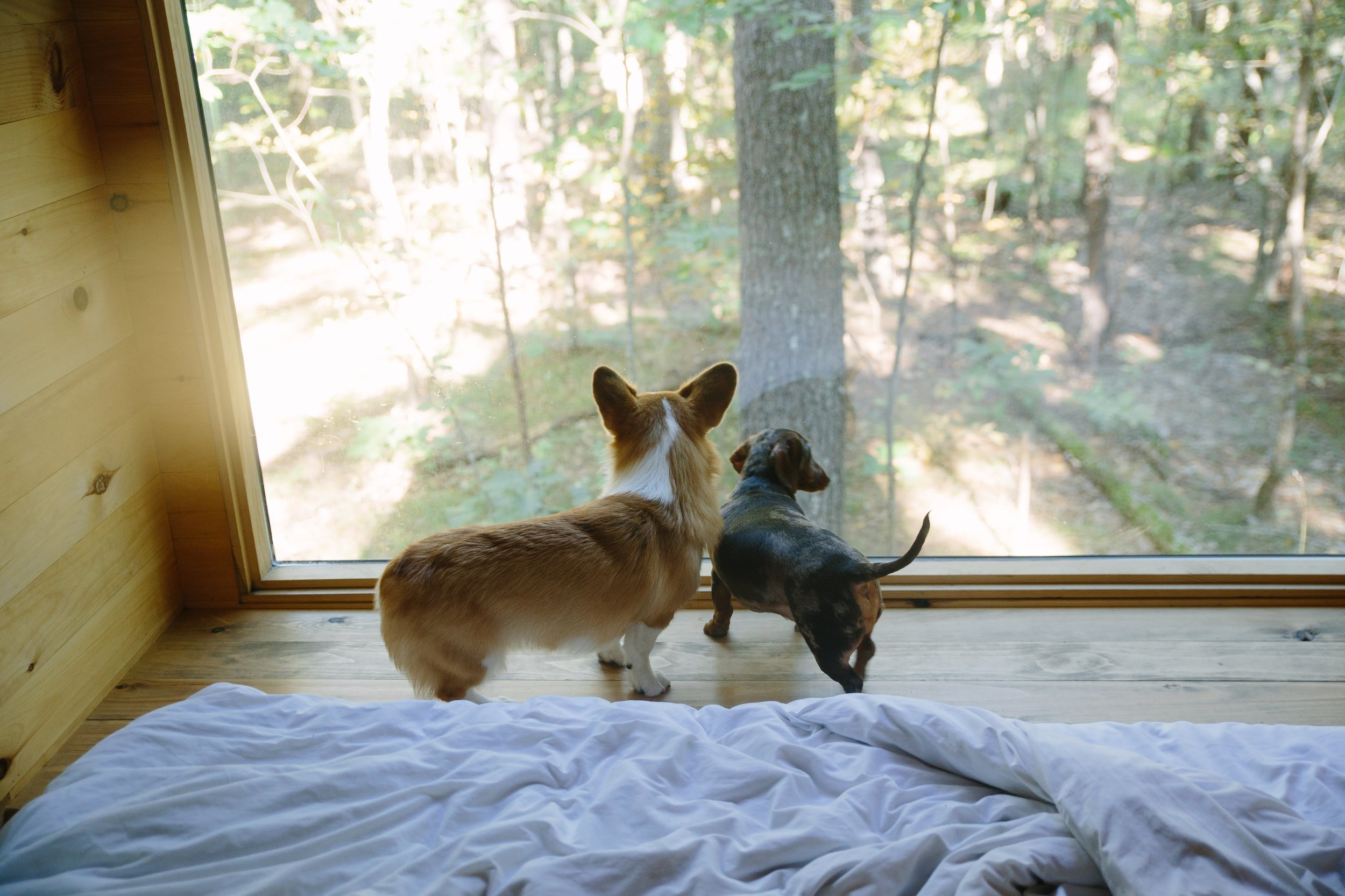 Watching the chipmunks outside.