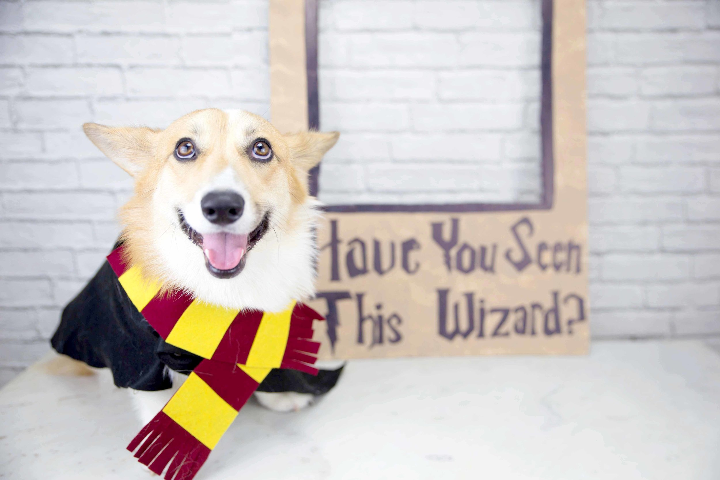 DIY Azkaban Photo Booth Prop