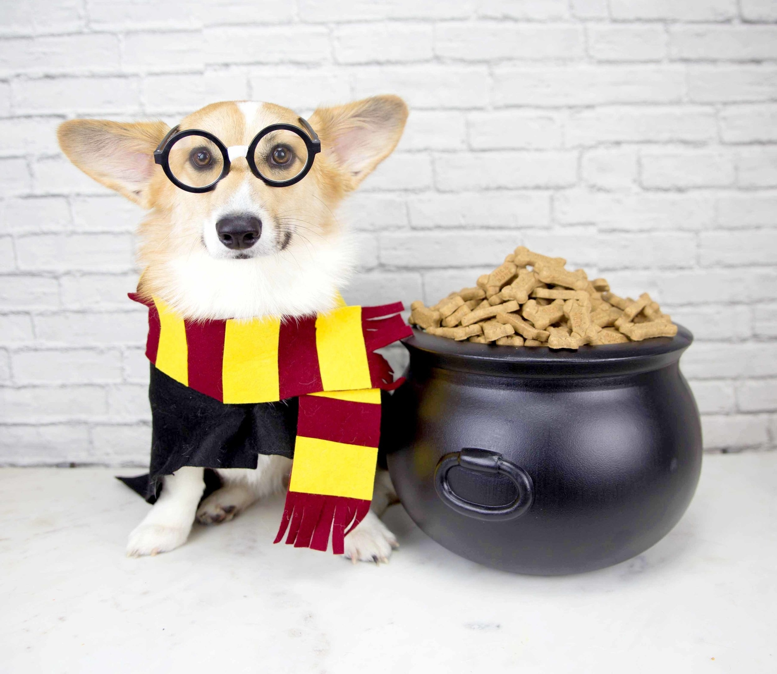 Harry Potter Birthday Party for Dogs on The Dapple Dog Lifestyle Blog. Featuring Butter Beer Recipe, Chocolate Frog Recipe, Harry Potter Cake, and more diys.
