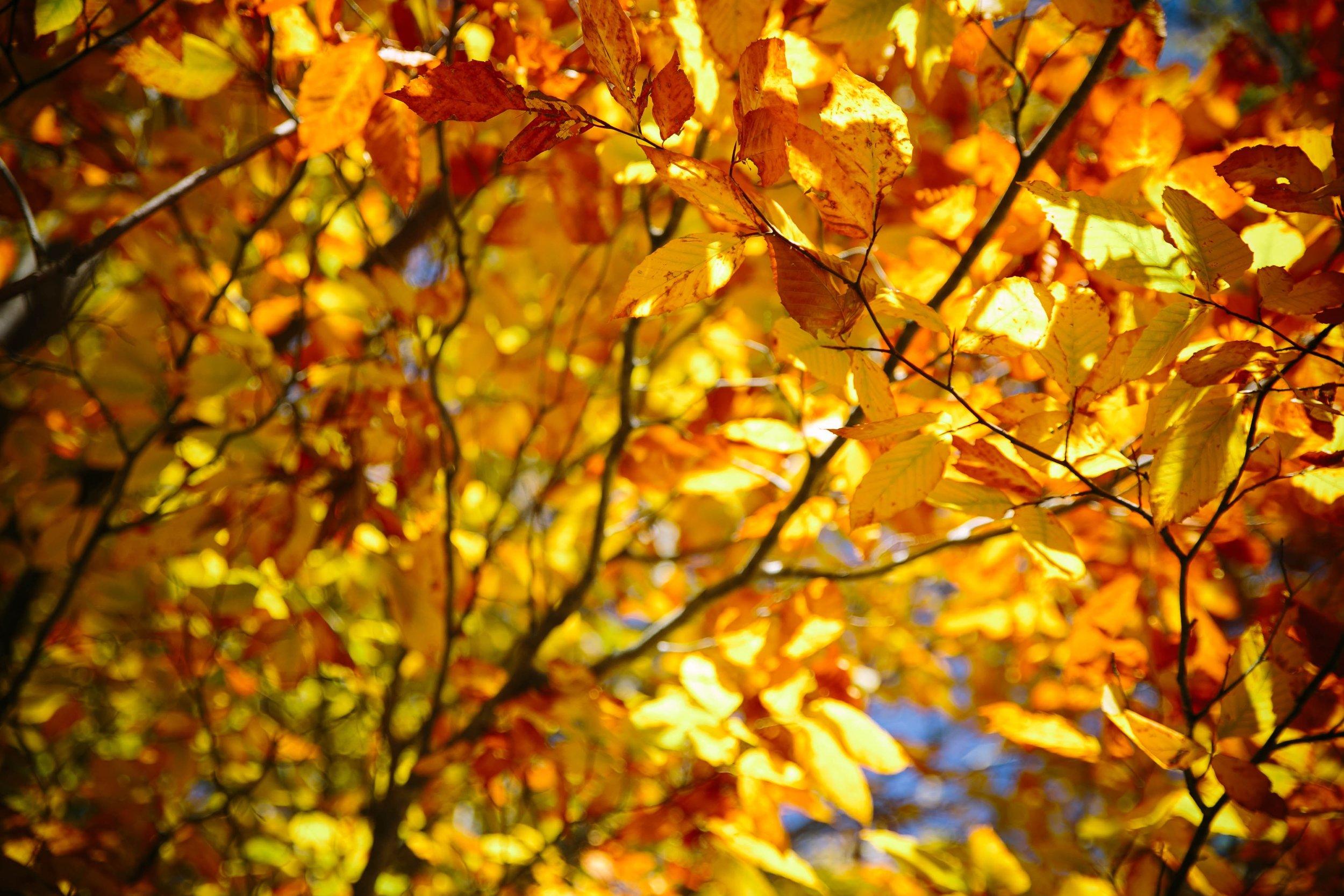 Fall colors at Mount Greylock