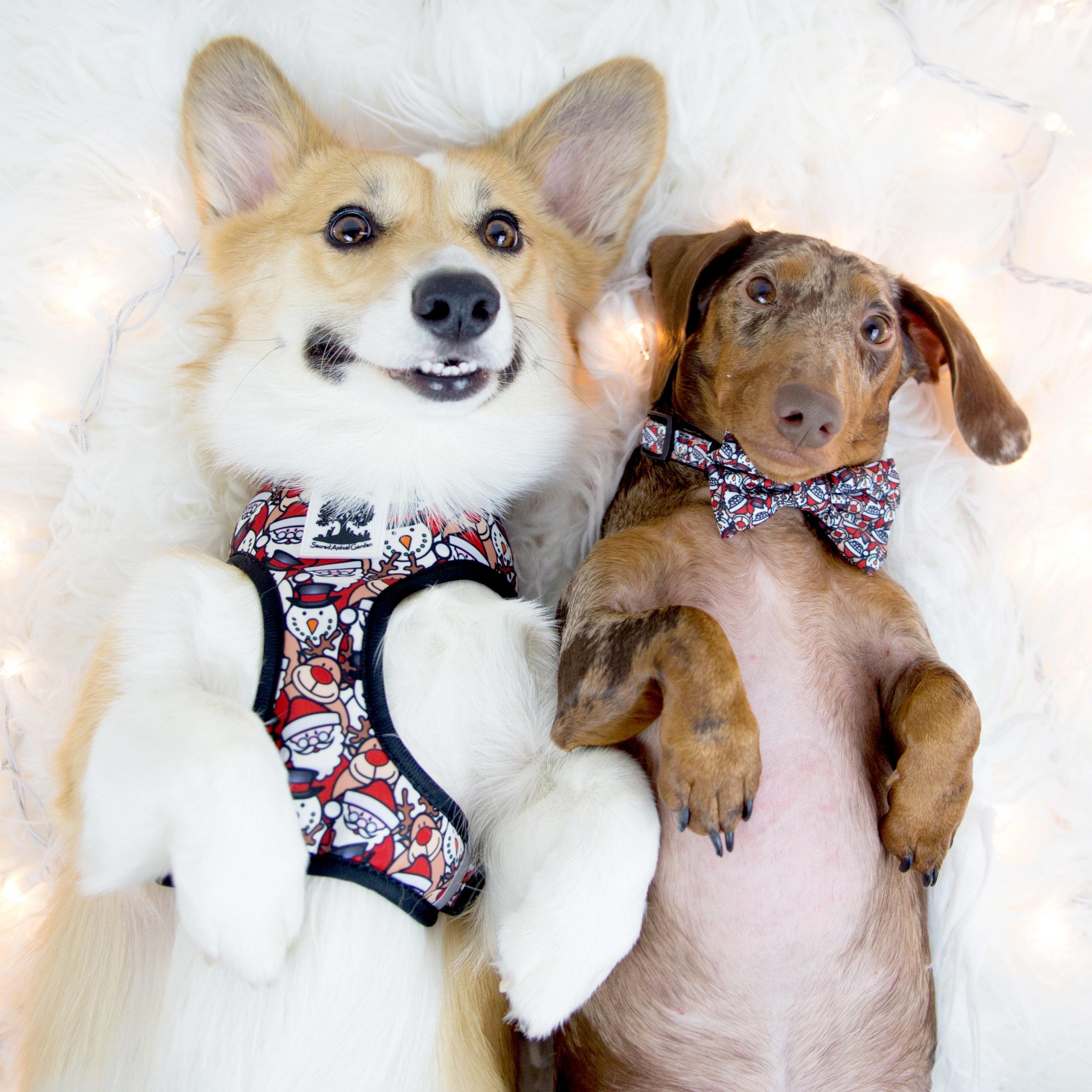 Barkley and Pips on The Dapple: Dog Lifestyle Blog