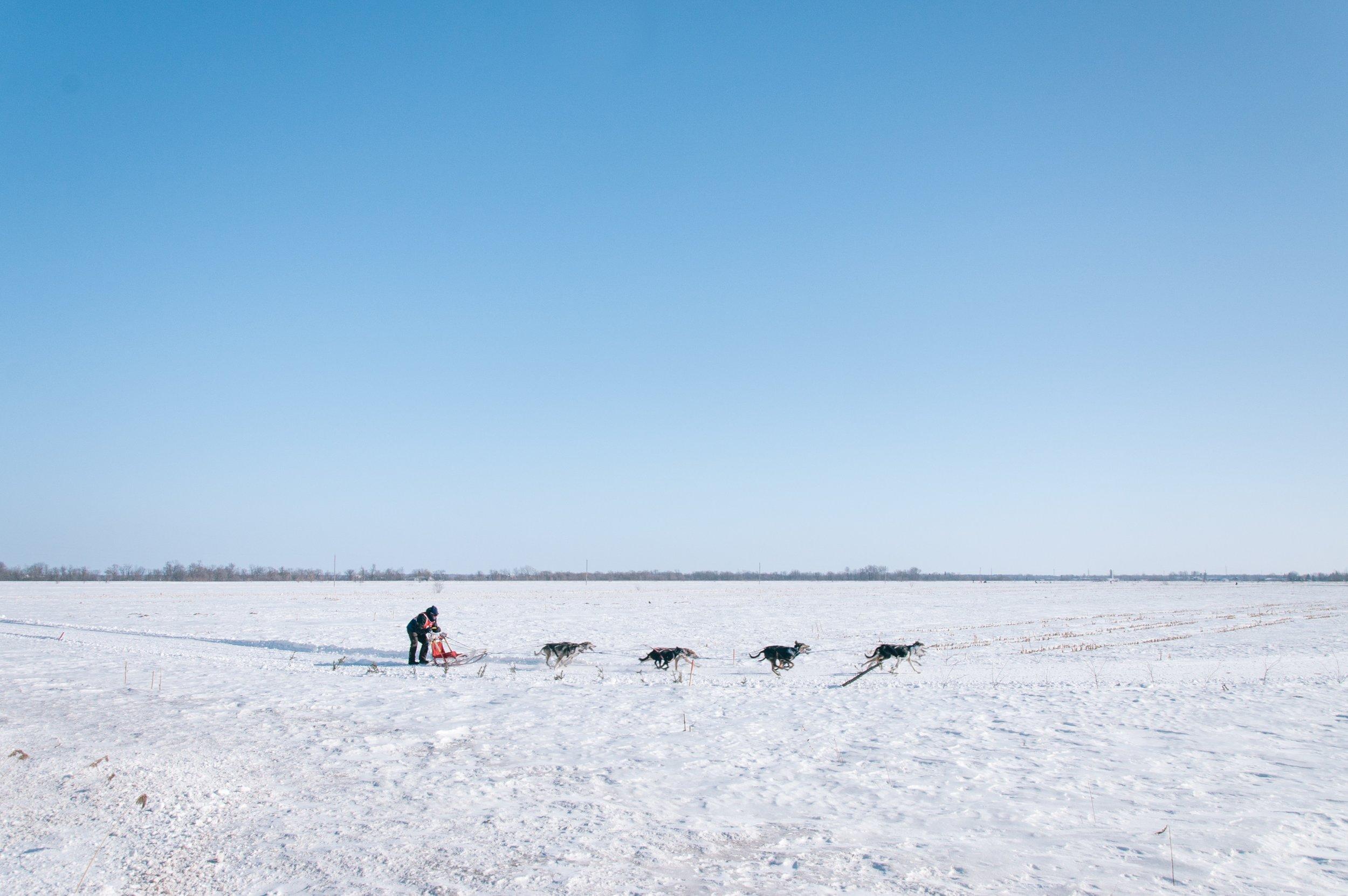 Iditarod Volunteers on The Dapple Dog Lifestyle Site