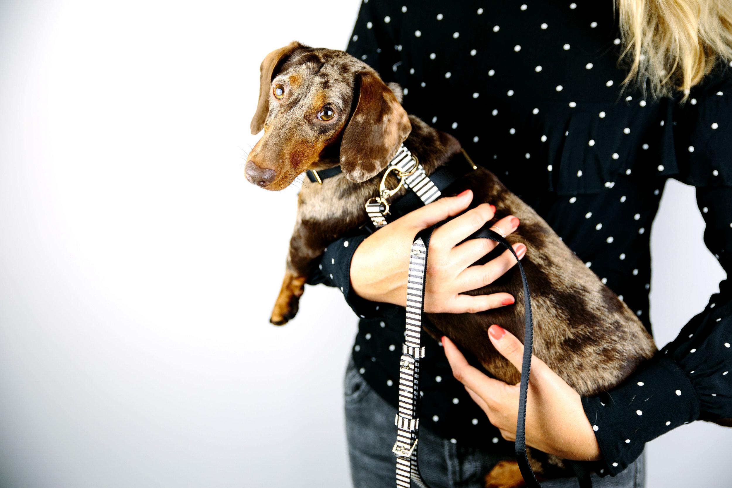 Henri Bemdel Dog Leash on The Dapple Dog Lifestyle Site