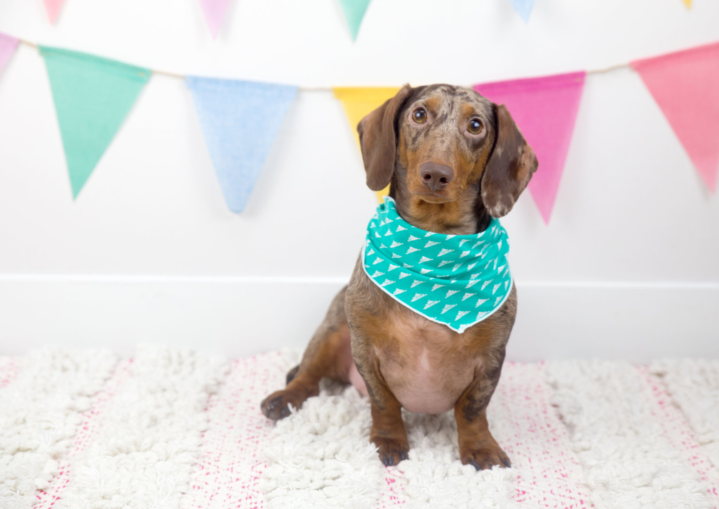 Interview with Stephanie Virkh of Canine Compassion Bandanas on The Dapple