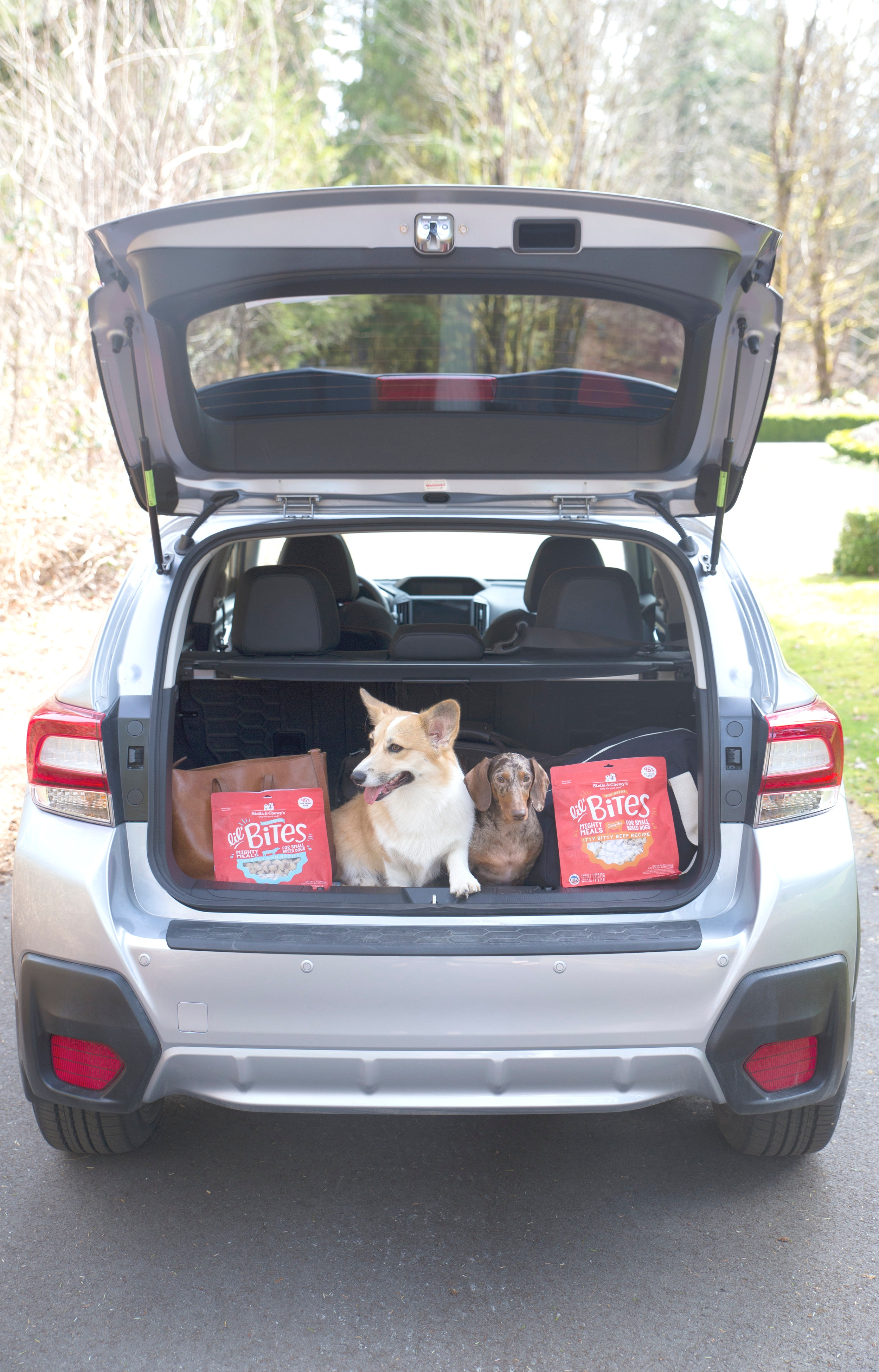 picture relating to Stella and Chewy Printable Coupons named How We Stored the Canine Content and Healthful upon Our Highway Vacation