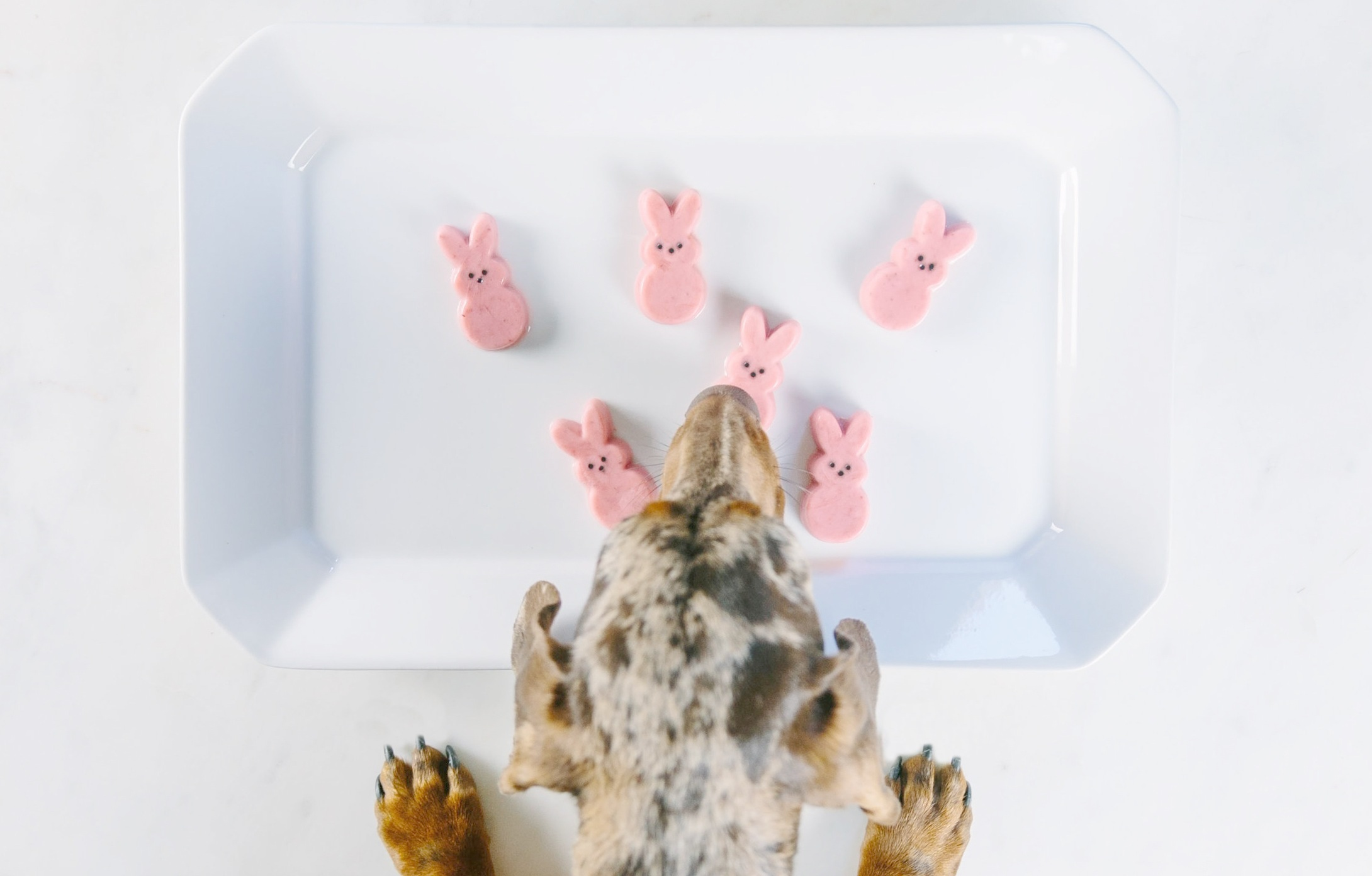 Easter%2BPeeps%2BRecipe%2Bfor%2BDogs%2Bon%2BThe%2BDapple%2BDog%2BLifestyle%2BSite