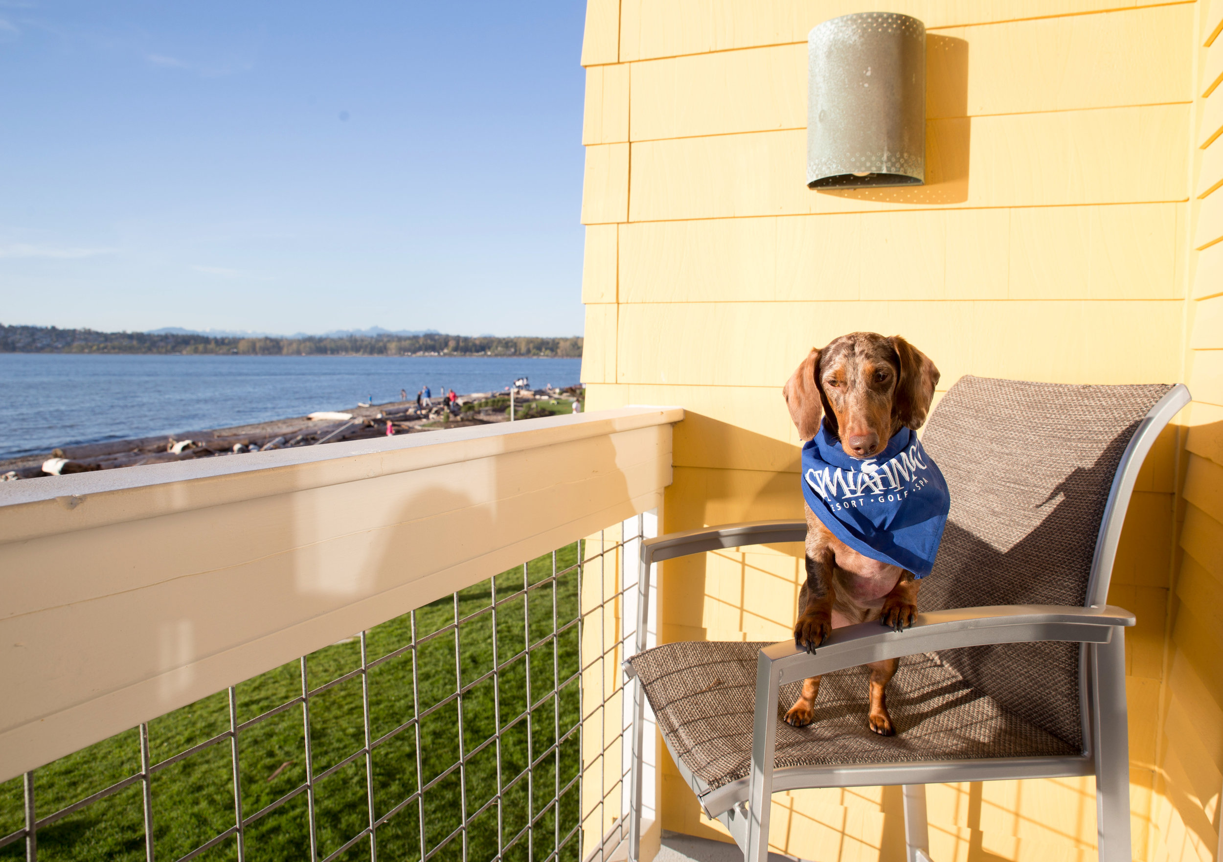 Bringing a Dog to Semiahmoo Beach Resort: A Review of Semiahmoo