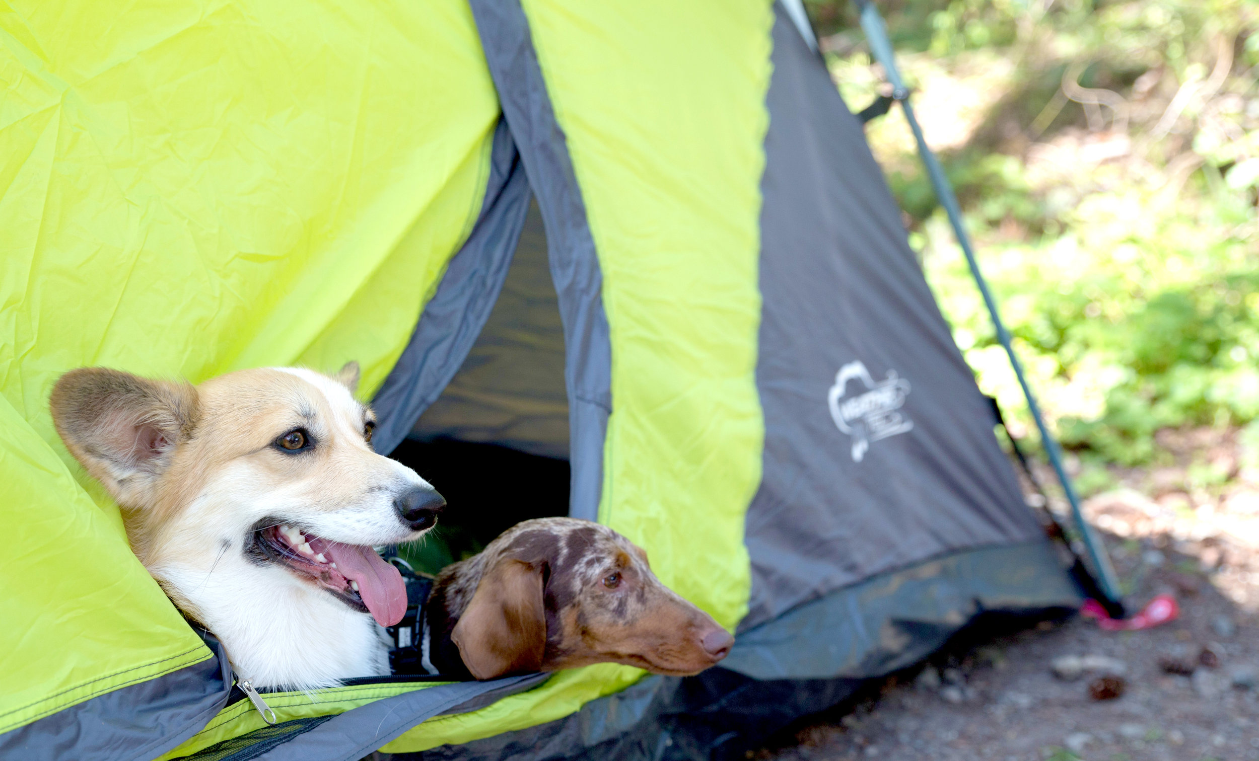 Hanging out in the tent