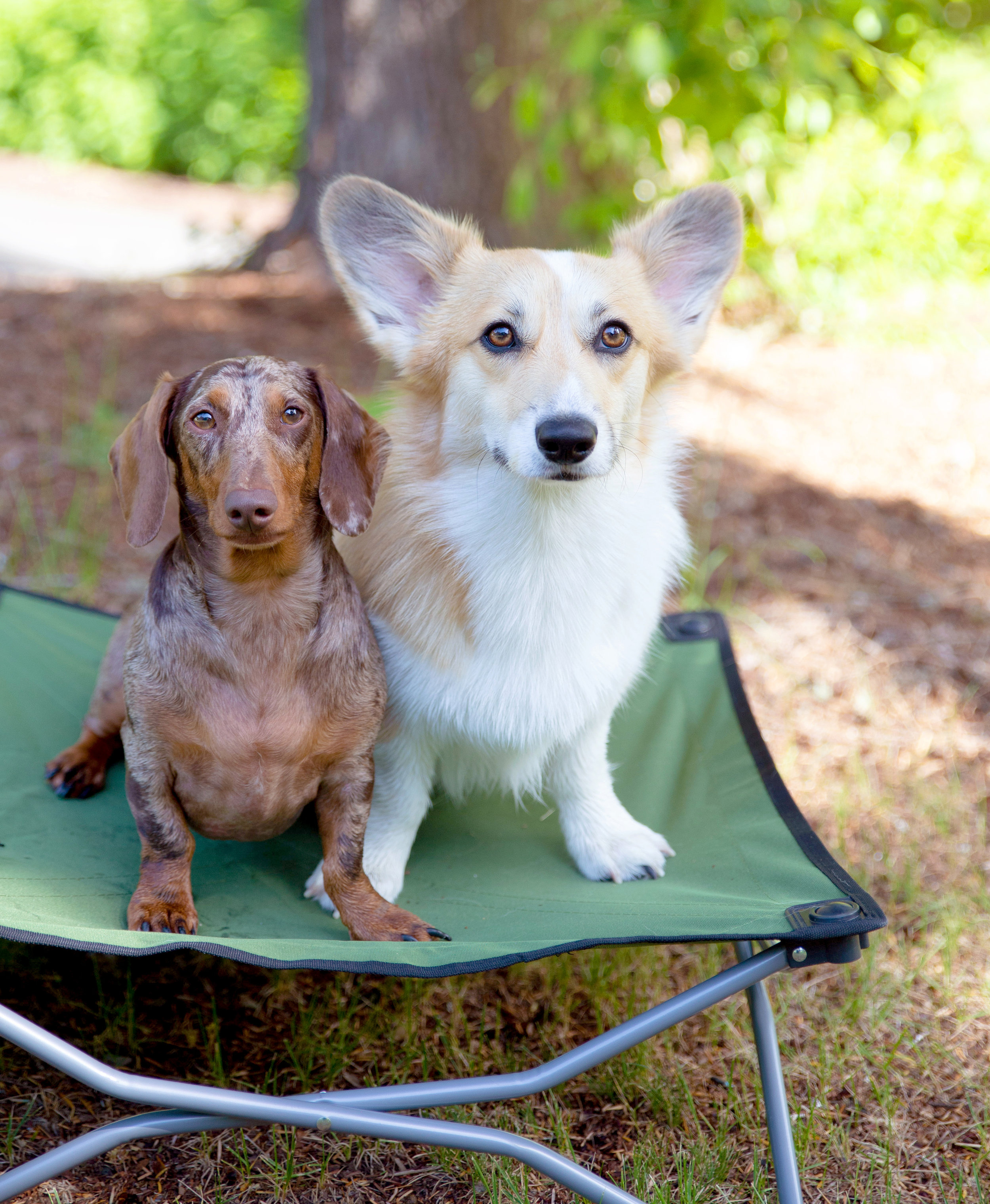 Lizzie and Dave on their Carlson Dog Cot