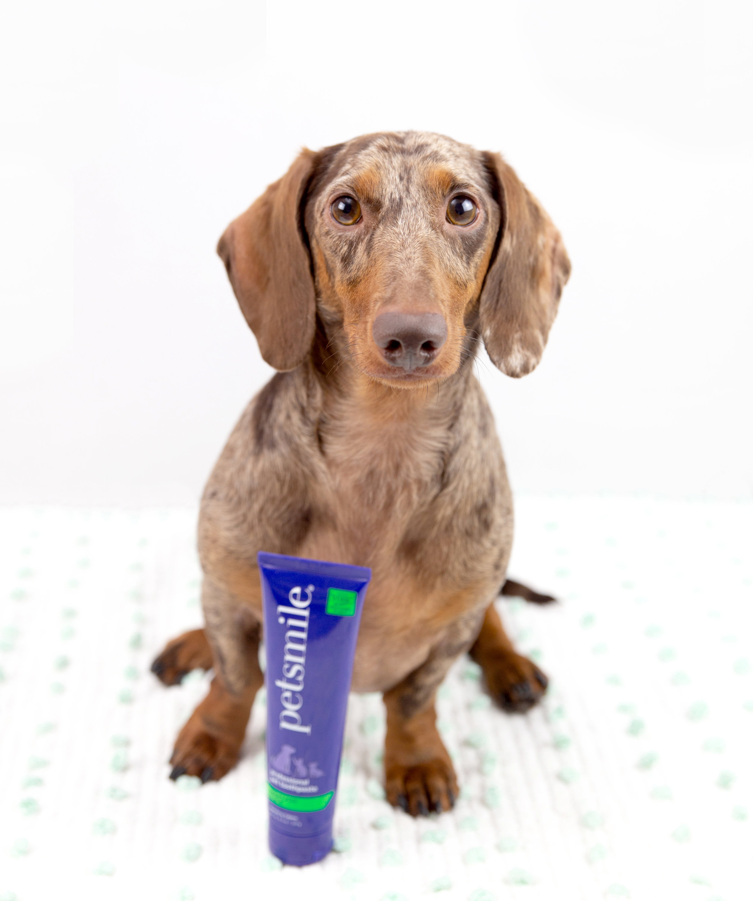 Review of Petsmile Dog Toothpaste: How to Keep Your Dog's Teeth Clean With No Brushing Required Dog Toothpaste for Healthier Gums and Better Breath
