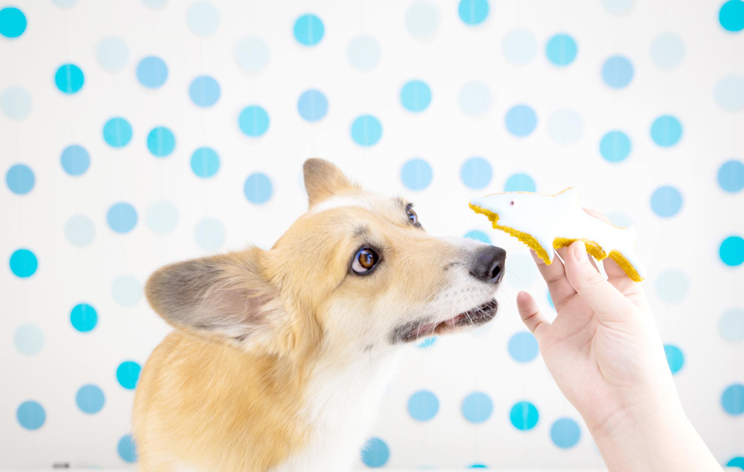 Easy Make at Home Shark Week Dog Treats