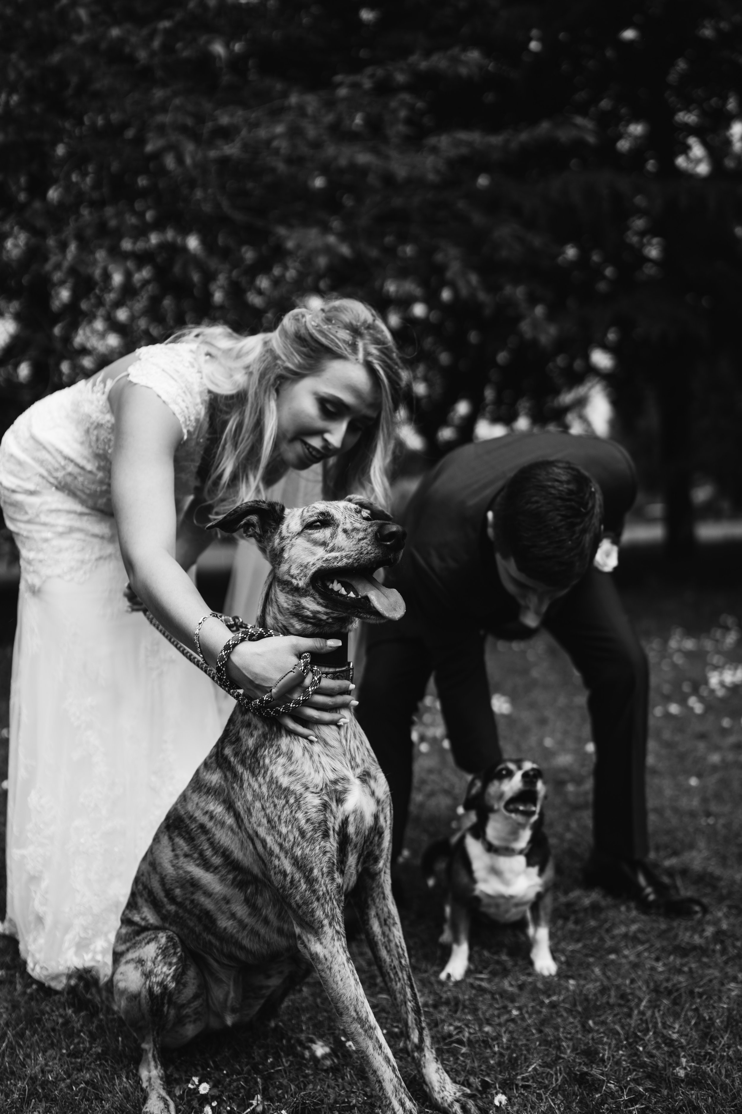 Dog at Hayne House Wedding