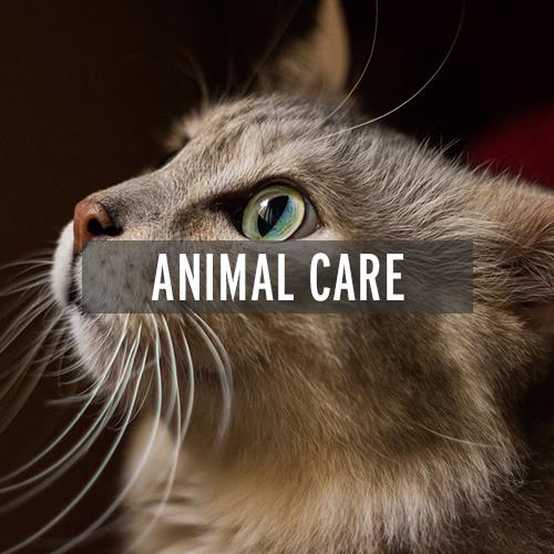 Animal Care   Nolensville, TN   Nolensville Business