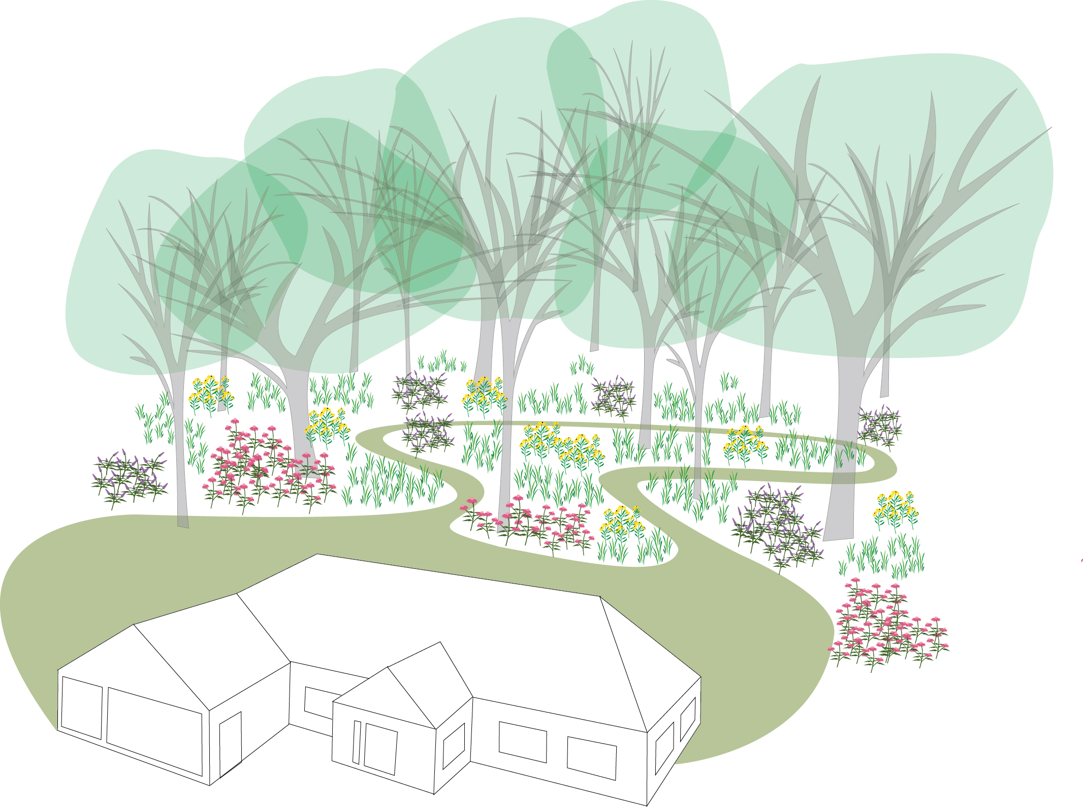 Restoring a woodland begins with an act of the imagination as it often hard to see through a dense understory what potential lies there. As this illustration suggests, clearing the understory, thinning out the canopy, restoring the ground cover, and creating paths can make the woodland part of your residential landscape.Illustration by Steve Heymans.