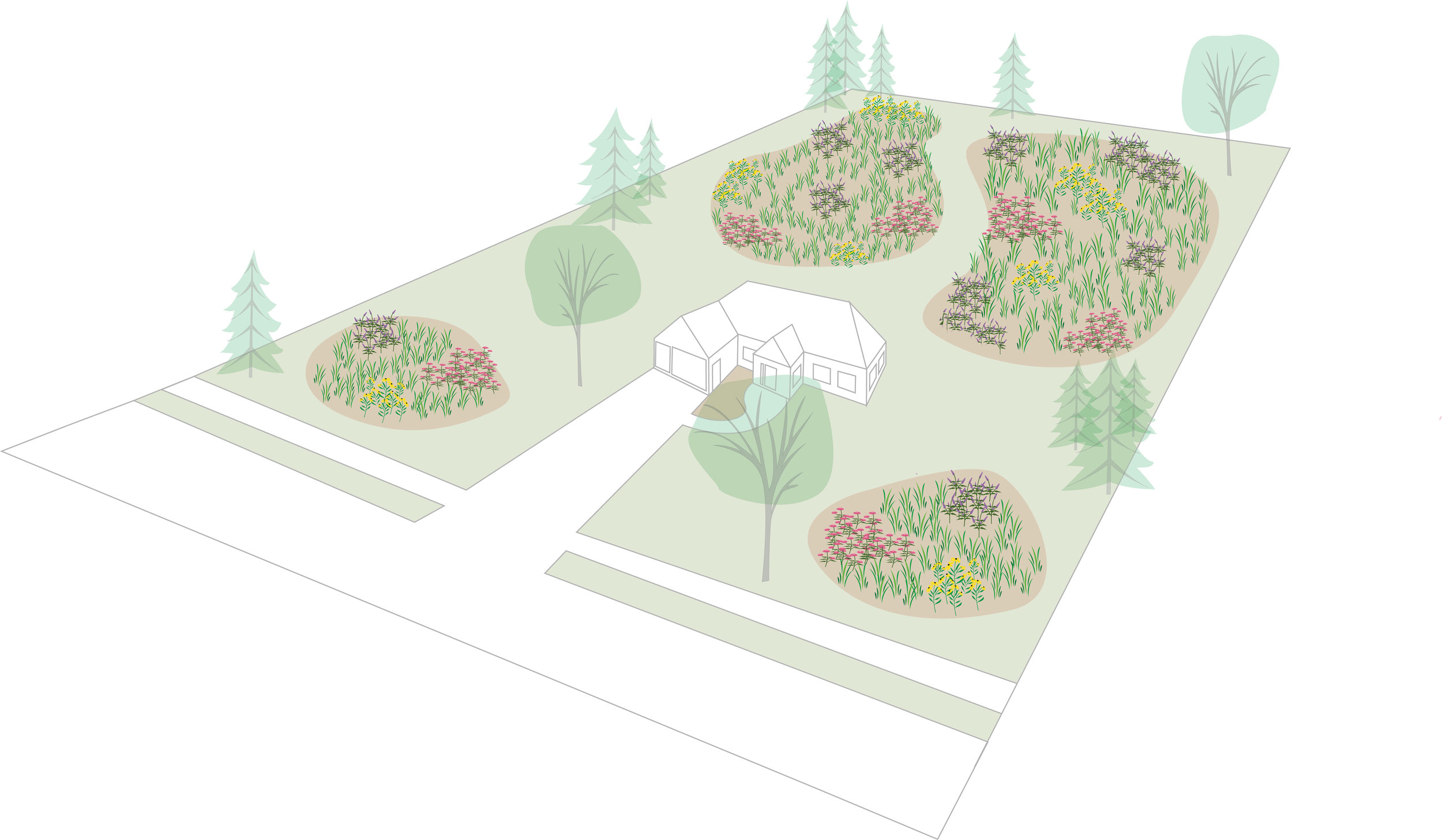 Most turf grasses are high maintenance--requiring watering, fertilizing, herbicides, and mowing. Despite this, most yards are seeded with turf grass. Prairie, or pollinator, plots give us a wonderful alternative to the exclusively turf grass landscape. Illustration by Steve Heymans.