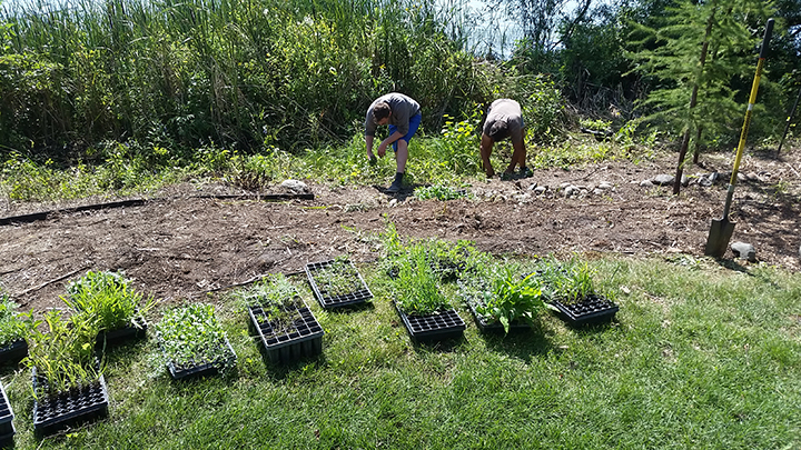 By inserting approximately 1.25 plugs every square foot, we saturate the area with natives, which should out-compete the weeds and will eventually reproduce themselves, filling up the area with native vegetation.