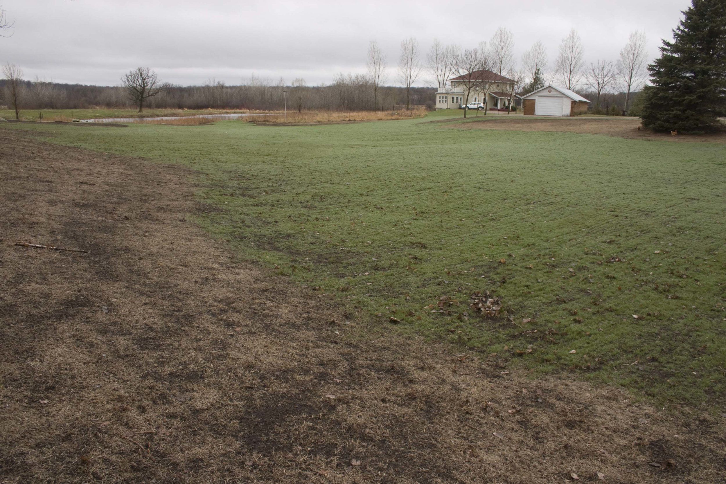 Here is the same area, probably photographed in October that same year. One sees the grass coming up on its own. It should also be said that the weeds are not germinating in the fall, and so very few weeds came up in this seeding.