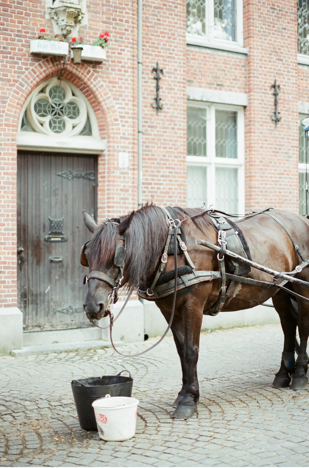 Brugge_Belgium_WeddingPhotographer©MadalinaSheldon_0001.jpg