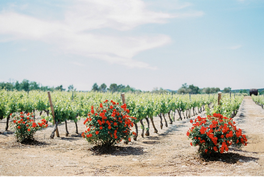 Provence_France_WeddingPhotographer©MadalinaSheldon_0023.jpg