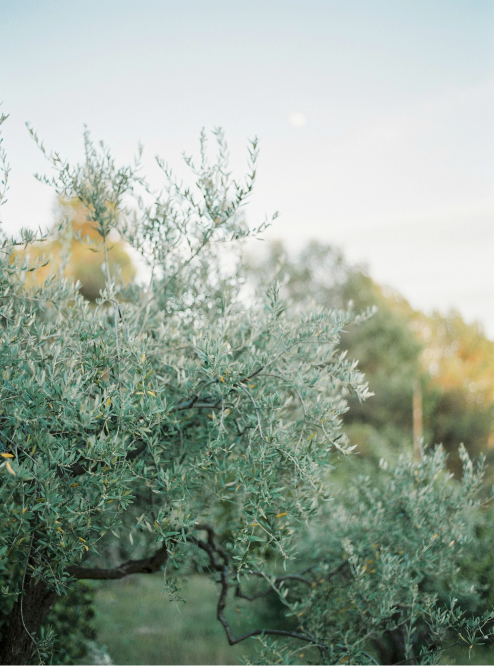 Provence_France_WeddingPhotographer©MadalinaSheldon_0026.jpg