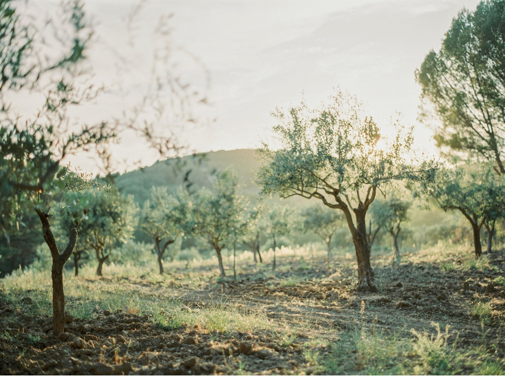 Provence_France_WeddingPhotographer©MadalinaSheldon_0047.jpg